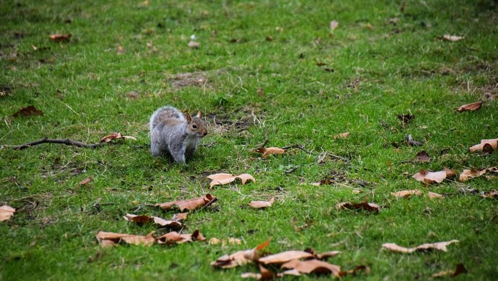 ecureuil-au-bout-de-la-terre