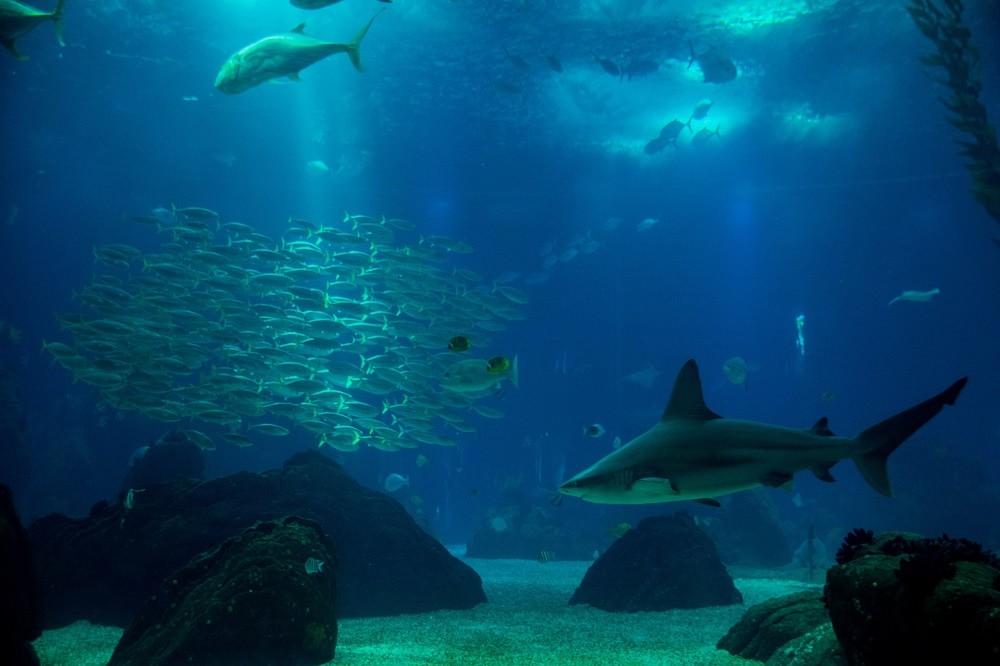 requin-au-bout-de-la-terre